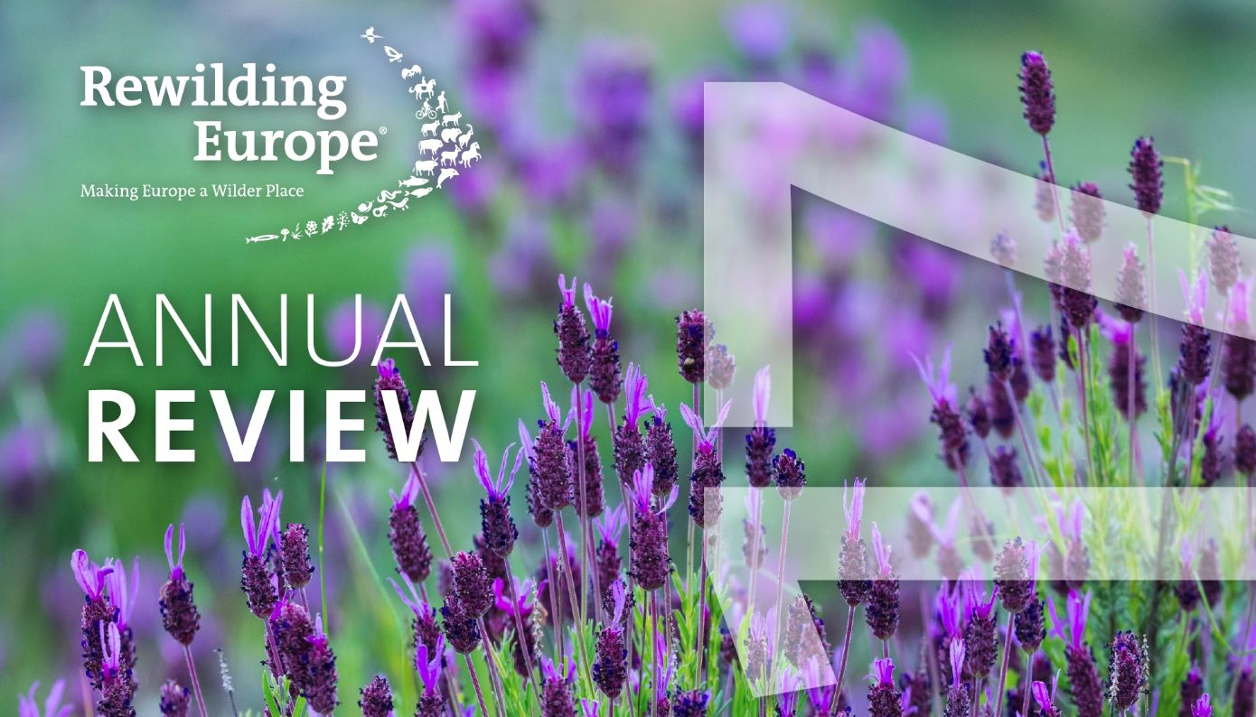 Read the Rewilding Europe Annual Review for 2017 by clicking on the image above.