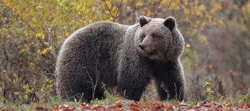 The European Safari Company will contribute to bear conservation and drive nature-based tourism development in Slovenia.
