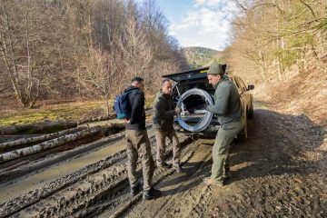 Prior to the Poiana Ruscă Mountains bison release, Marius and Roli had spent two years helping Matei Miculescu and Daniel Hurduzeu, the two rangers working at the first reintroduction site.