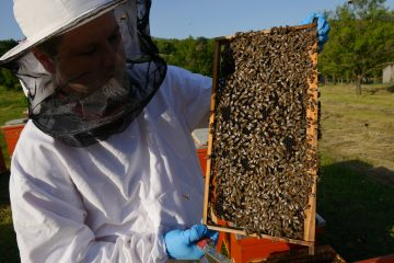 Rewilding Europe Capital has also supported a beekeeping business in the Velebit Mountains rewilding area.