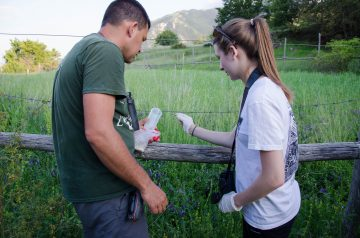 A Salviamo l'Orso volunteer removes material from a fence for genetic sampling.