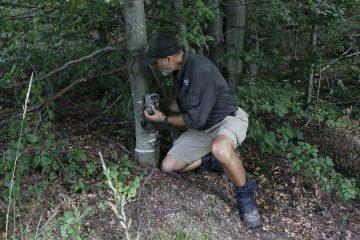A bison ranger installs a camera trap prior to the bison release in Poiana Ruscă.
