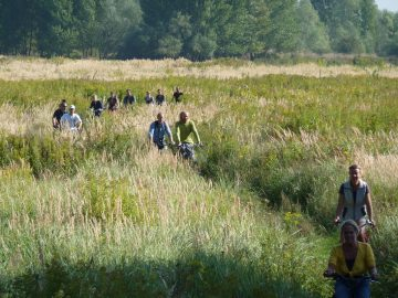 Attracting up to 200,000 visitors a year, the Millingerwaard and surrounding areas reconnect people with wild nature and contribute to a vibrant local economy.
