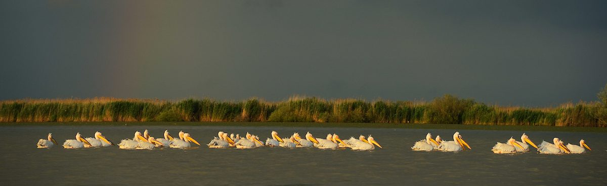 The Danube Delta is home to some magnificent fauna and flora, with 300 species of birds and over 100 species of fish.