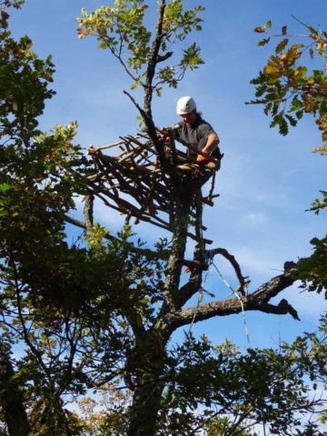 Dobromir Dobrev, a vulture expert attached to the Rewilding Rhodopes team, building the nest.