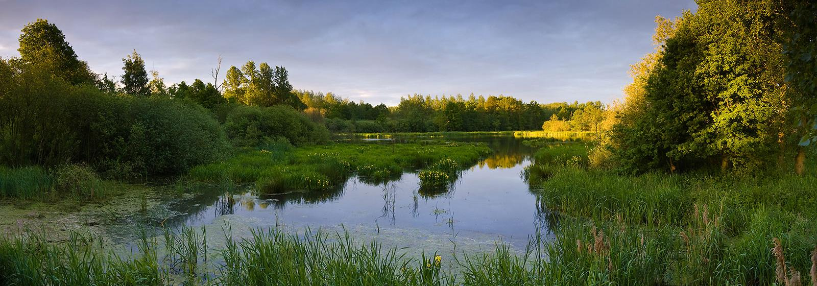 Kempen~Broek, situated on the northeastern edge of the Kempens Plateau in the Netherlands, is one of three pioneer rewilding projects analysed in the article.