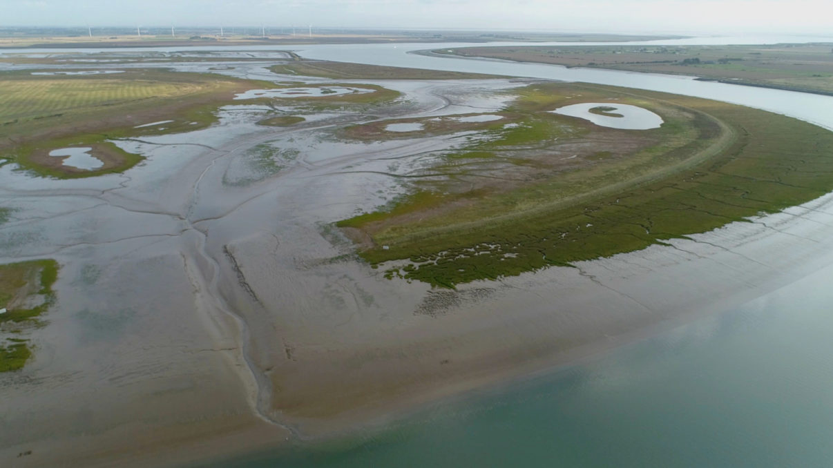 Rewilding Europe is delighted to welcome the Wallasea Island Wild Coast Project, UK's largest and most innovative coastal wetland creation project, to the European Rewilding Network.