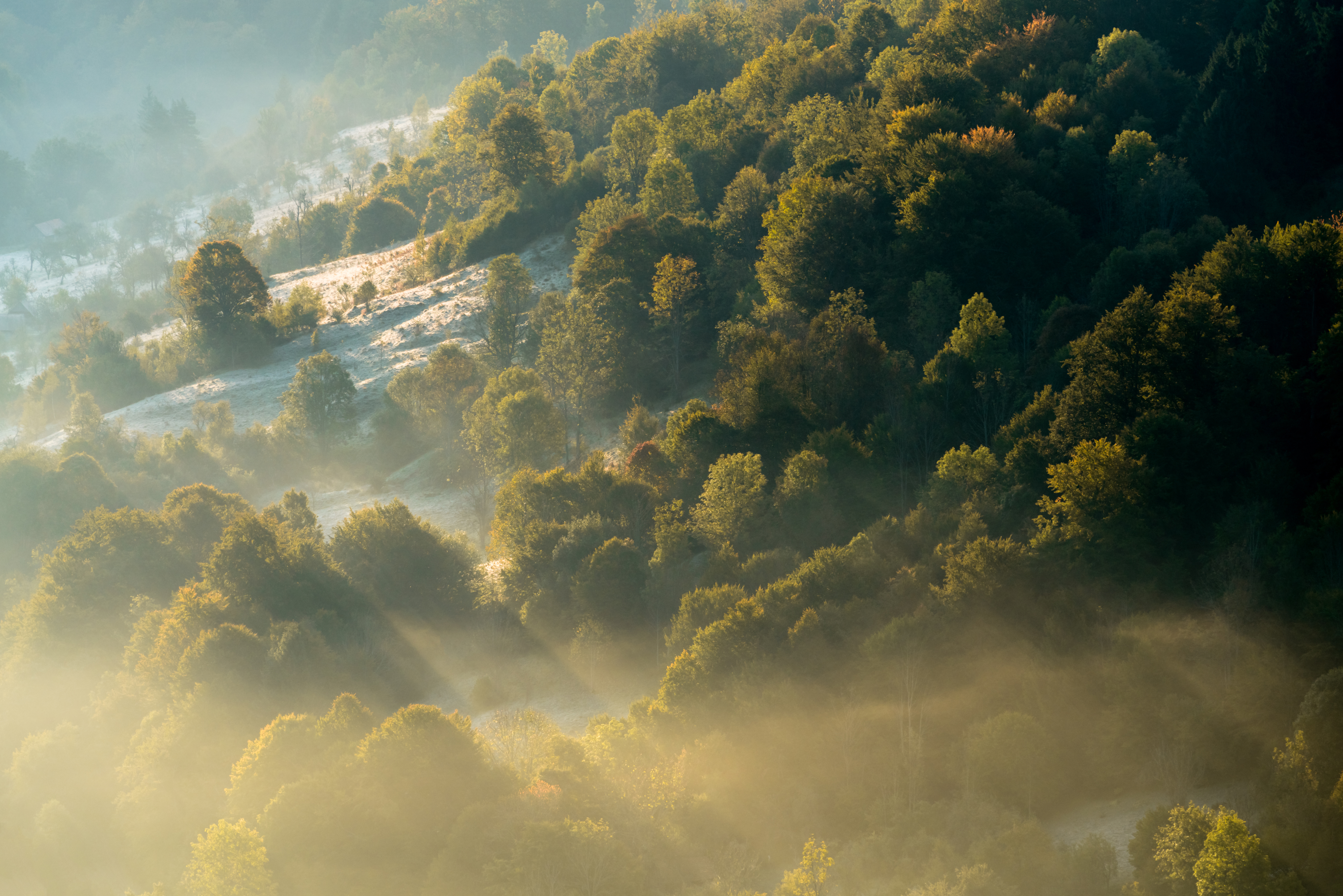 """Photo of the Southern Carpathians rewilding area by Daniel Mirlea was featured together with the exhibition """"The biggest land mammal in Europe returns to the Southern Carpathian wilderness"""" at the Bucharest Photo Festival."""