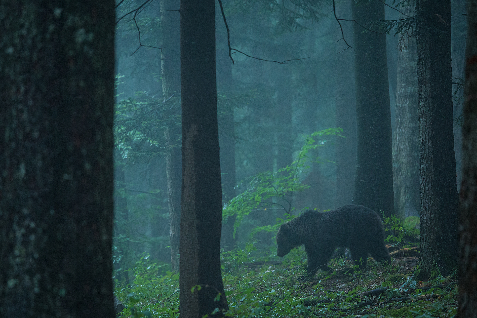 The Living on the Edge project is raising awareness of large predators in Central Europe, and promoting the co-existence of humans, wildlife and wild nature.