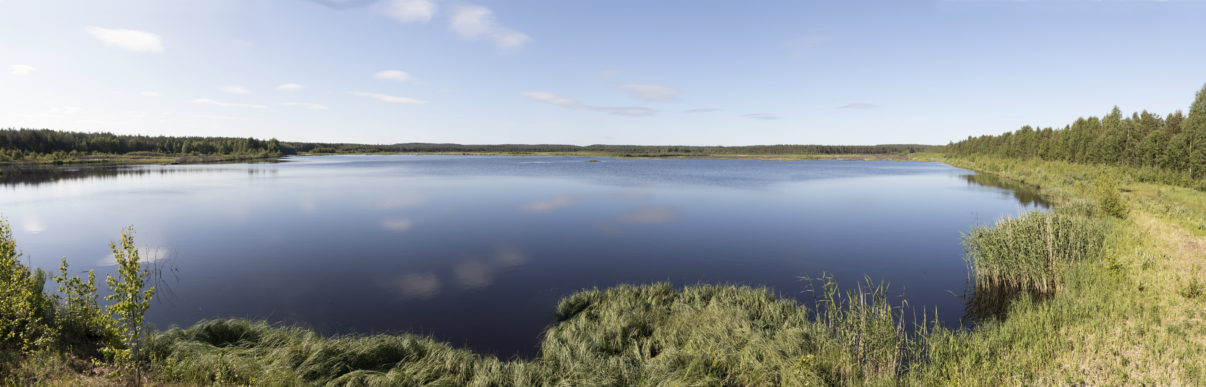 Linnunsuo is currently in the process of rewilding itself, having been converted into a wetland over the past five years.