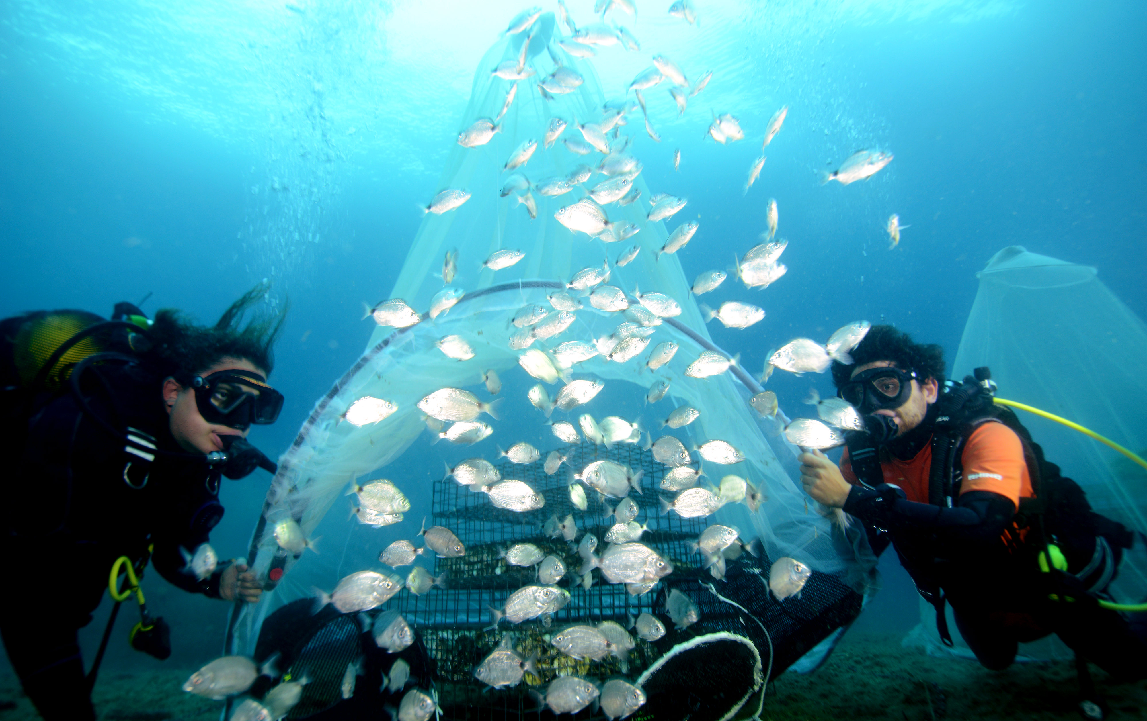 Every year the BioRestore project releases thousands of fish raised in captivity back into the wild.