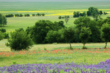 Natural grazing systems can be a tool to maintain or restore the biodiversity of open and semi-open European landscapes.