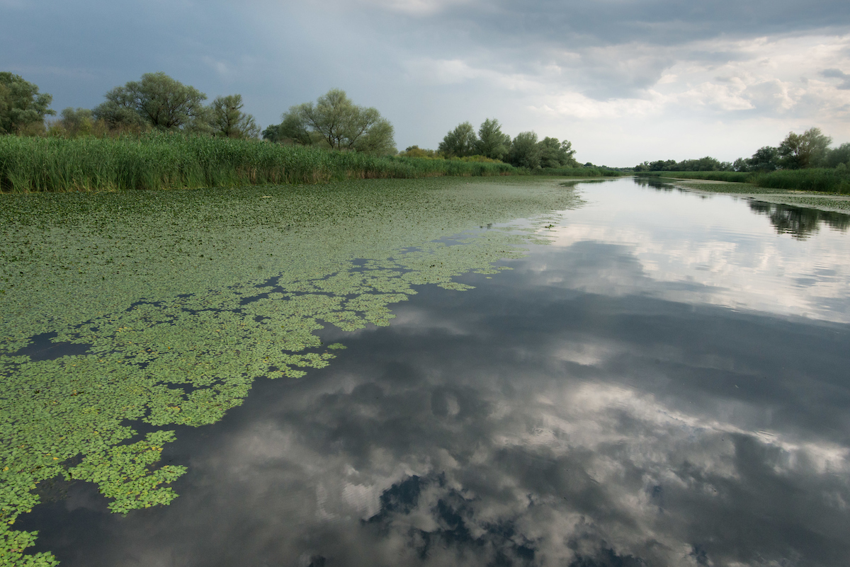 The 20,000 euros collected through the crowdfunding campaign will fund the removal of 10 obsolete dams from the Kogilnik River in the Ukrainian part of the Danube Delta.