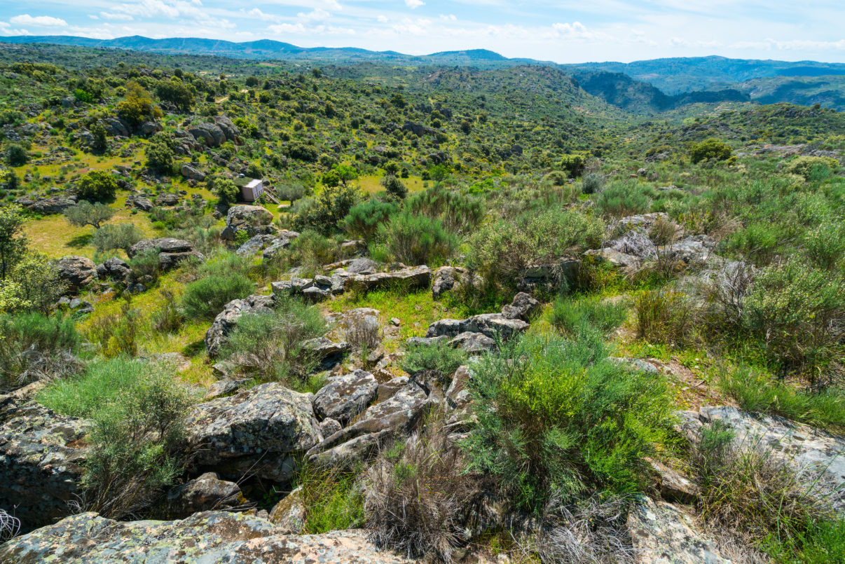 Western Iberia rewilding begins scaling up in Portuguese Greater Côa Valley. Image: Faia Brava, Côa Valley, Western Iberia.