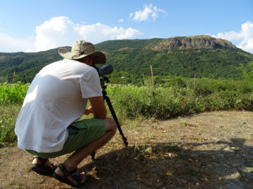 Monitoring breeding griffon vultures in the Rhodope Mountains.