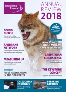 Rewilding Europe's new Annual Review looks back at all our achievements, and reflects our ambition with insightful feature stories.