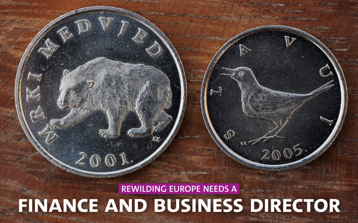 Rewilding Europe has a vacancy for a Finance & Business Director