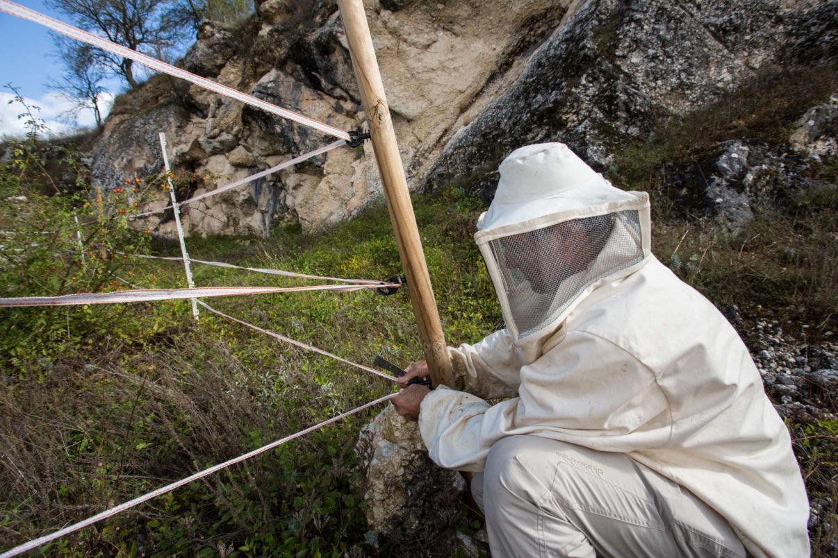 "Apiarist Mario Iacobacci from ""La Girlanda"" enterprise in Carrito di Ortona dei Marsi mounting electric fence to protect beehives from bears."