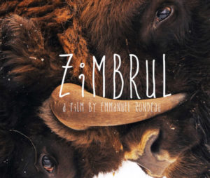 "Zimbrul"" is an intimate snapshot of people's feelings about the return of this iconic species."