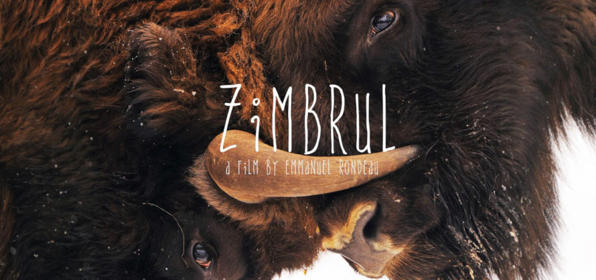 Zimbrul documentary bison southern Carpathians rewilding