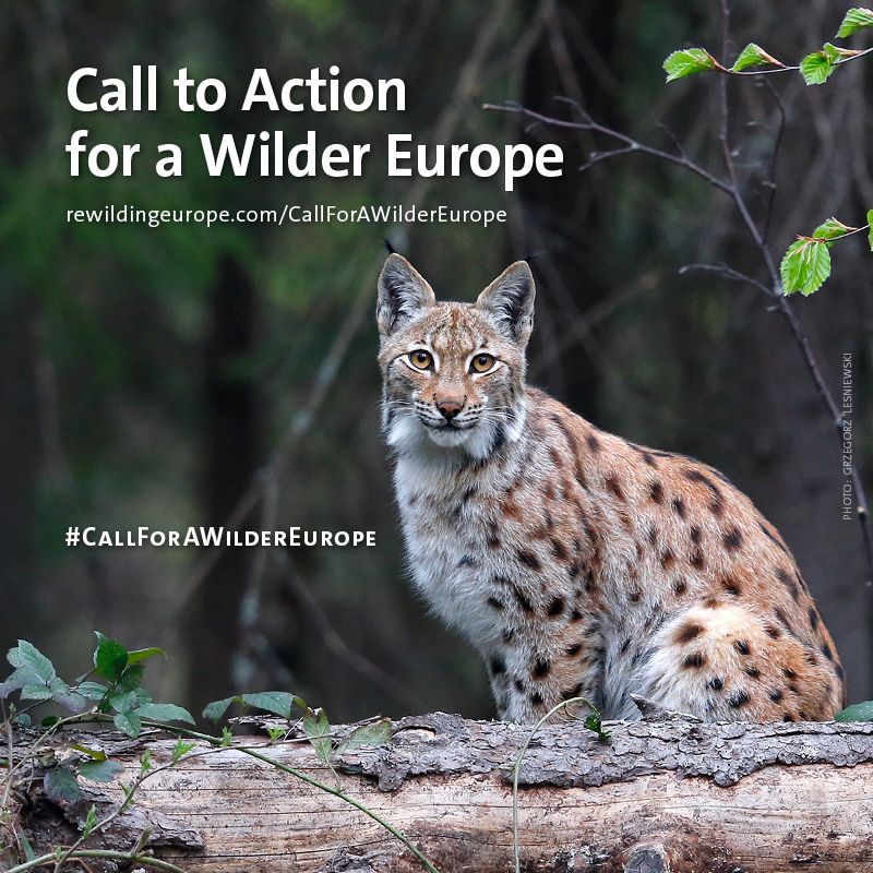 Join Our Call to Action for a Wilder Europe