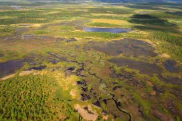 Natural peatlands provide a dense carbon store: 20% of all global soil carbon on just 3% of land surface - equivalent to 450 gigaton... (photo: intact peatland in Swedish Lapland).