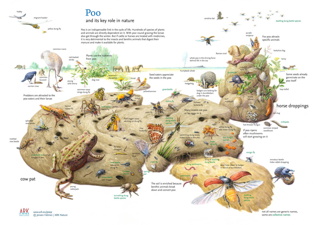 Illustration: poo and its key role in nature