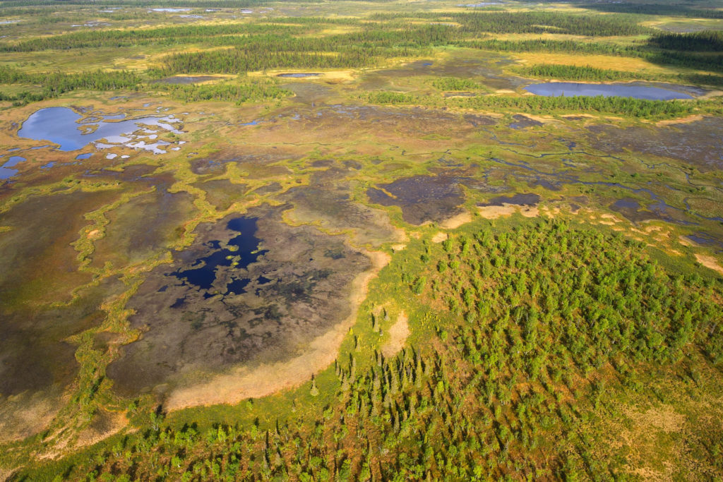 Peat bog lands and taiga boreal forest, Sjaunja Bird Protection Area, Laponia UNESCO World Heritage Site, Greater Laponia rewilding area, Lapland, Norrbotten, Sweden
