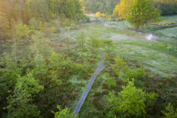 Great Nete Forest