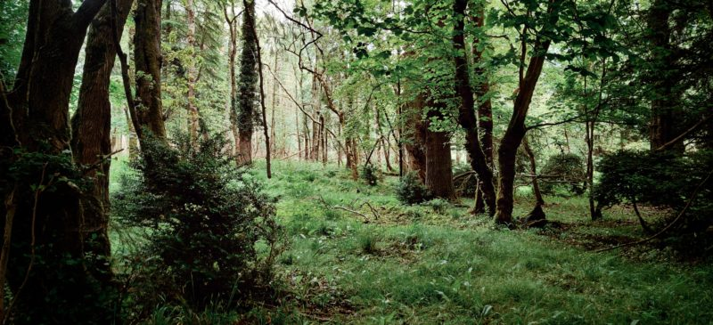 Forest on the Dunsany Estate
