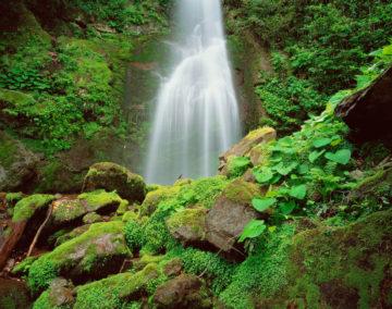 Mission Georgia, Mtirala National Park, unnamed waterfall