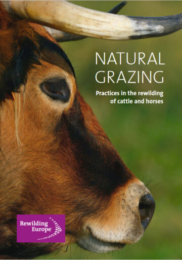 Natural Grazing booklet cover