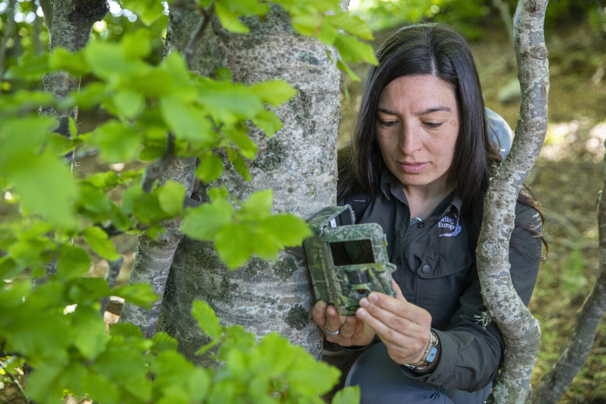 Rewilding Apennines Communications Officer, Angela Tavone, checking a camera trap in wildlife corridor among Abruzzo, Lazio and Molise National Park and Majella National Park. Central Apennines, Italy. 2020
