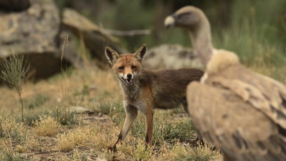 Snapshot Rewilding, um novo caminho para a natureza em Portugal