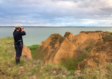 Pelican counting in the Ukraine Danube Delta