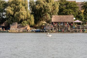 Danube Delta Dalmatian Pelican tourism