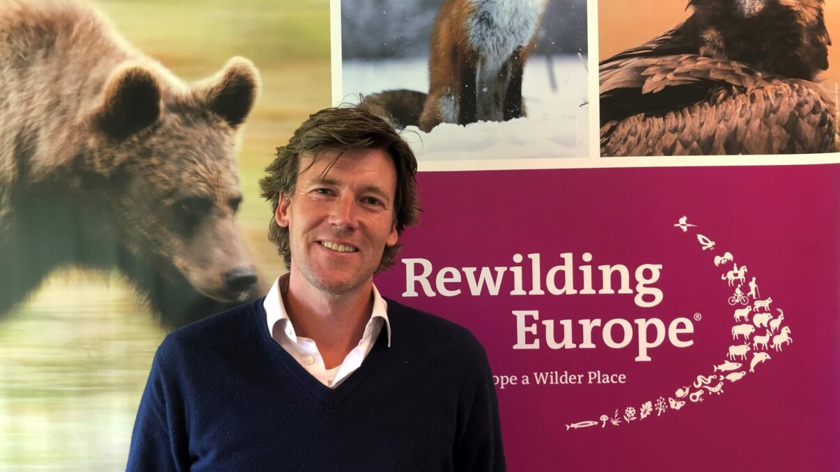 Willem Nolens as the new Head of Finance of Rewilding Europe