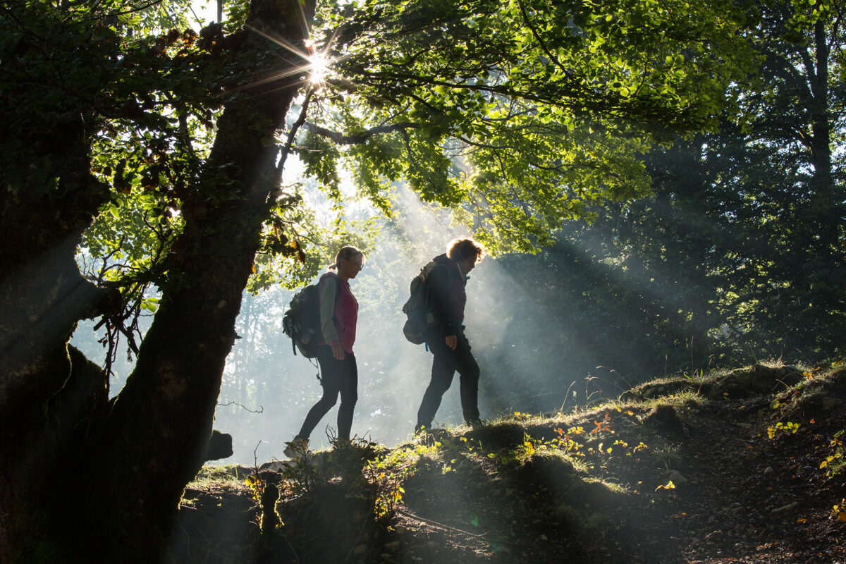 Young women hiking in the morning in old beechwood near Pescasseroli. Abruzzo, Lazio and Molise National Park. Abruzzo, Italy. August 2014
