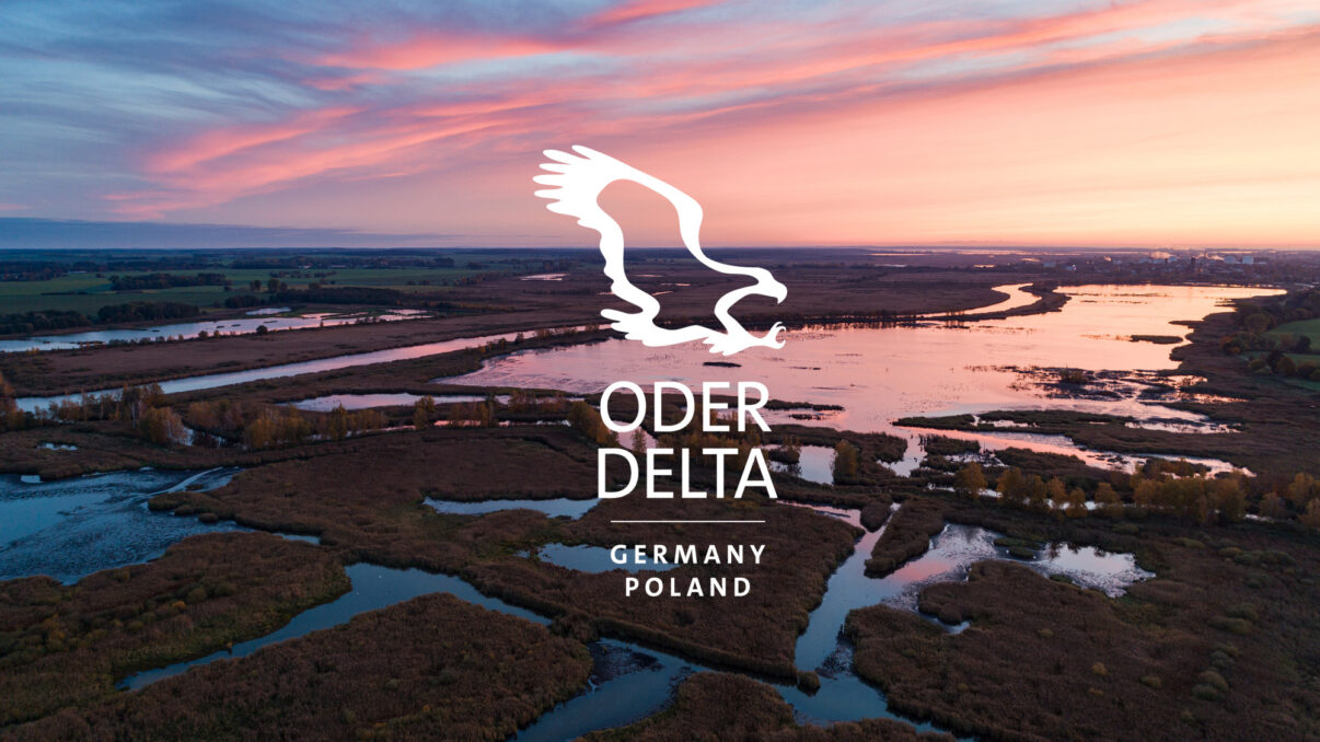 Aerial view of rewetted peat bogs and the Peene River in fall colours at sunrise, just outside the city of Anklam, Rewilding Europe Oder Delta, Mecklenburg-Vorpommern, Mecklenburg-Western Pomerania, Germany, October 2020