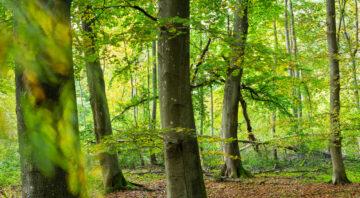 NSG Karlsburger und Oldenburger Holz, Rewilding Europe Oder Delta, Mecklenburg-Vorpommern, Mecklenburg-Western Pomerania, Germany, October 2020
