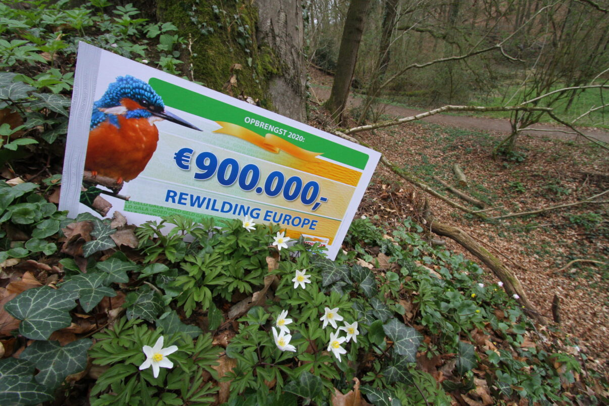 Annual Donation Dutch Postcode Lottery