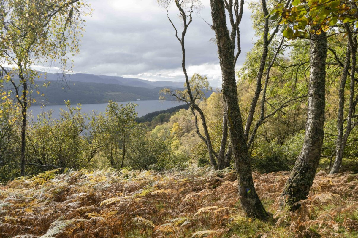 Bunloit's eclectic mix of woodland is home to both broadleaf and coniferous trees, with native species such as Caledonian pine and birch.