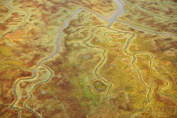Salt marshes in the Scheldt Valley