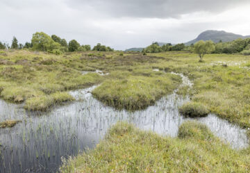 Rewilding of the Bunloit Estate will enhance wild nature, boost the local economy and lock up carbon.