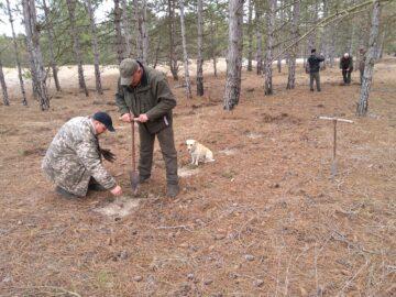 Oak planting on Zhebriyansky Ridge