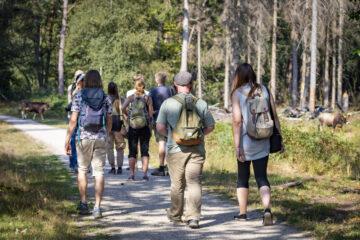 Group of tourists visiting De Maashorst