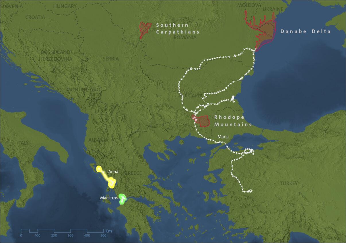 GPS tracks of three tagged Dalmatian Pelicans