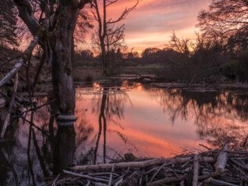 Sunset at Bamff Wildland